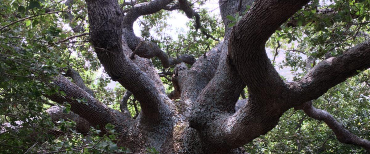 Route-13-Arni-Tree-blog-1000-wide-tiny